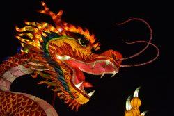 Portrait de dragon Gaillac