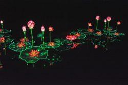 Lotus (plan large)