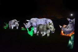 rhinoceros-gaillac-a